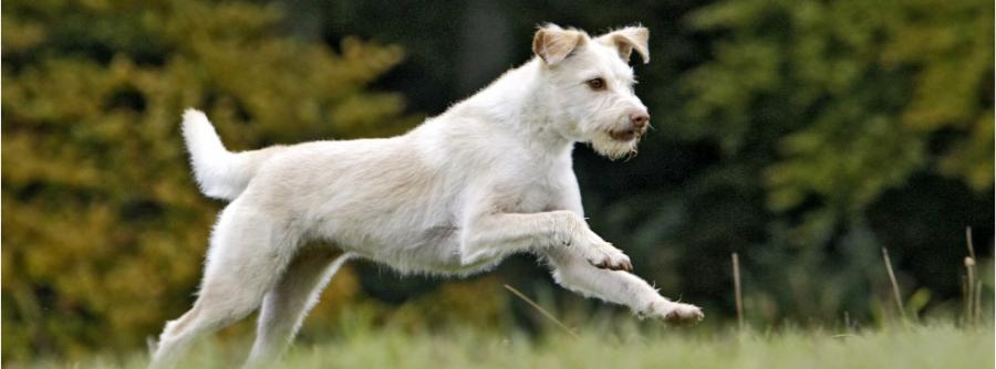 Hundephysio Radevormwald